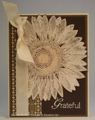 Grateful sunflower