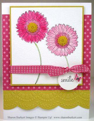 Reason to Smile primrose petals summer starfruit