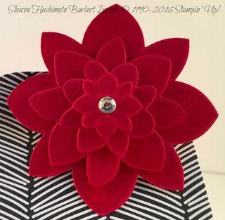 Baker's Box flower close