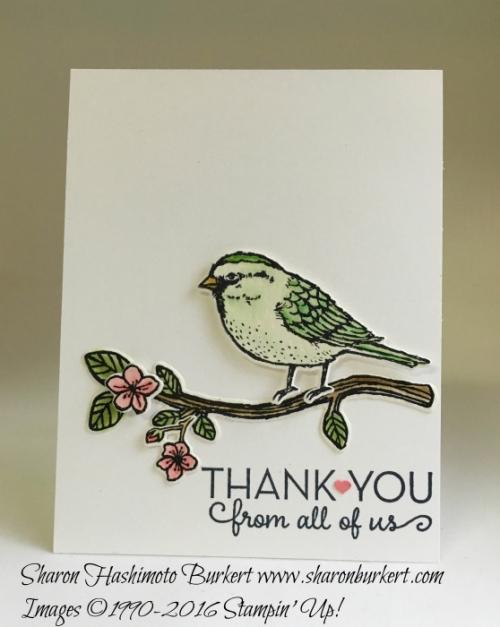Best Birds in green